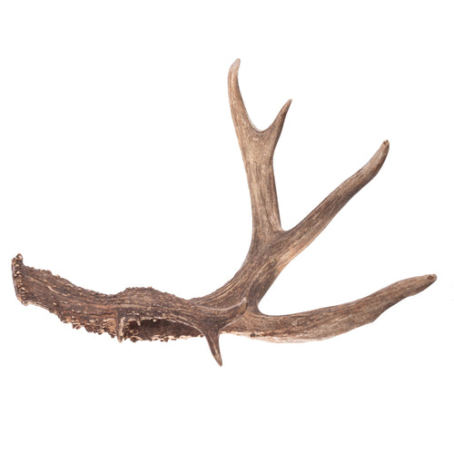 Real Deer Antler