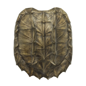 Replica Alligator Snapping Turtle Shell