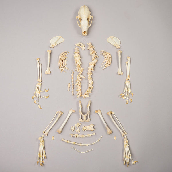 Real Fisher Skeleton