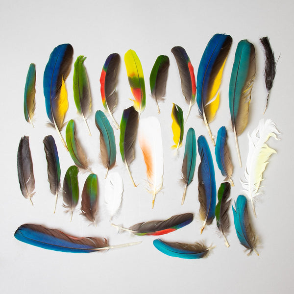 Real Macaw Feathers Assortment