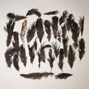 Real Ostrich Feathers Assortment (Damaged)