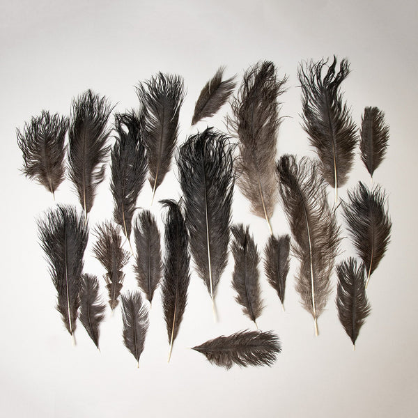Real Ostrich Feathers Assortment