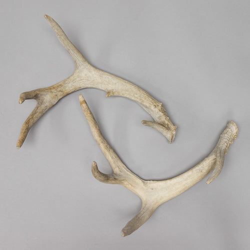 Real Deer Antler Set
