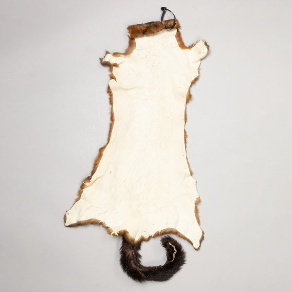 Real Common Brushtail Possum Skin