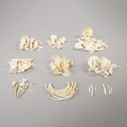 Real Bag-O-Miscellaneous Bone (Damaged)