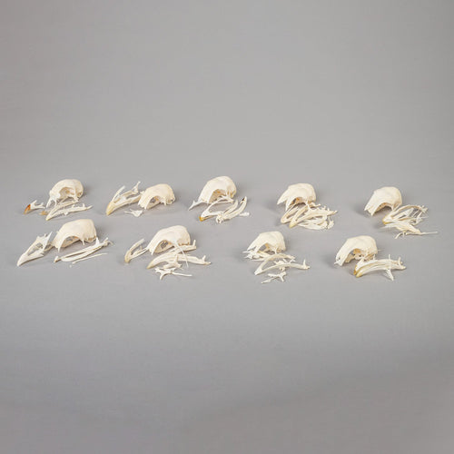 Real Bag-O-Chicken Skulls (Damaged)