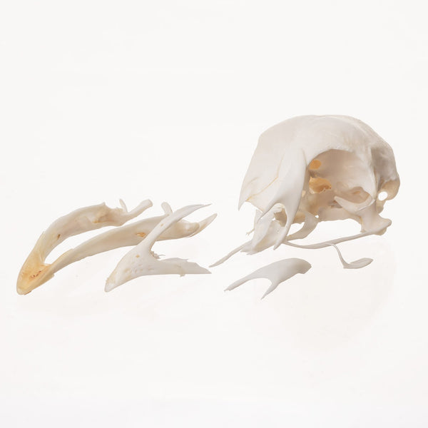 Real Bag-o Chicken Skulls (Damaged)