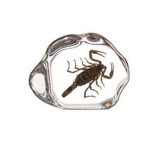 Real Acrylic Brown Scorpion Paperweight