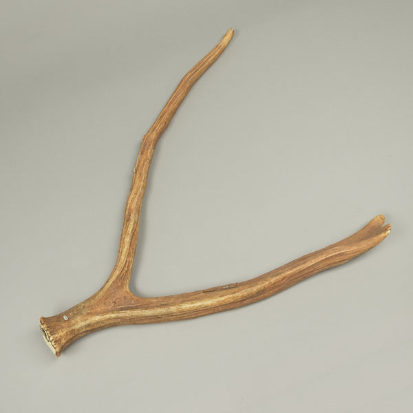 Real Pere David's Deer Antler - (Pair)