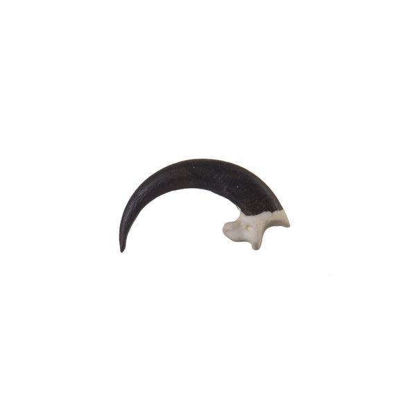 Replica Bald Eagle Talon