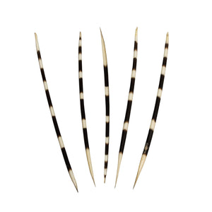 Real African Porcupine Quill - (Set - Thin)