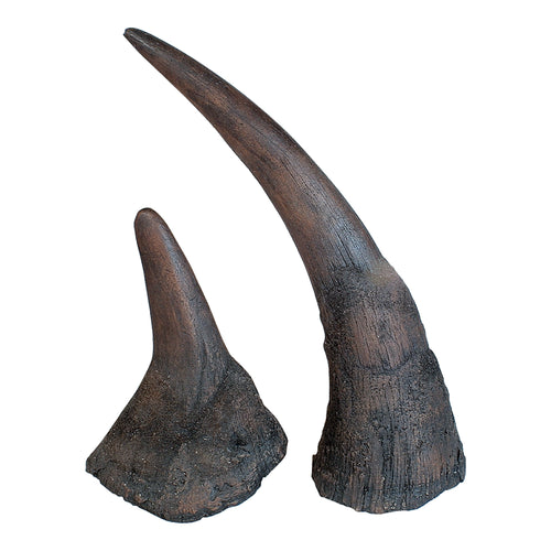 Replica Black Rhinoceros Horns