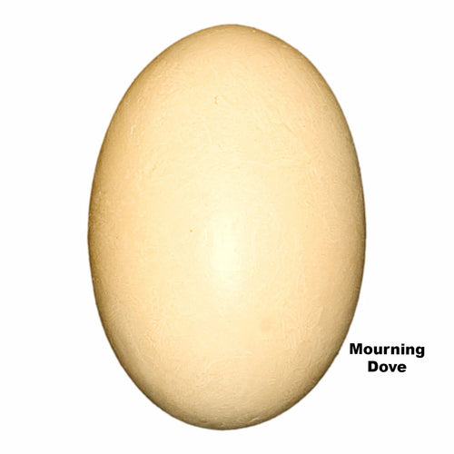 Replica Mourning Dove Egg (23mm)