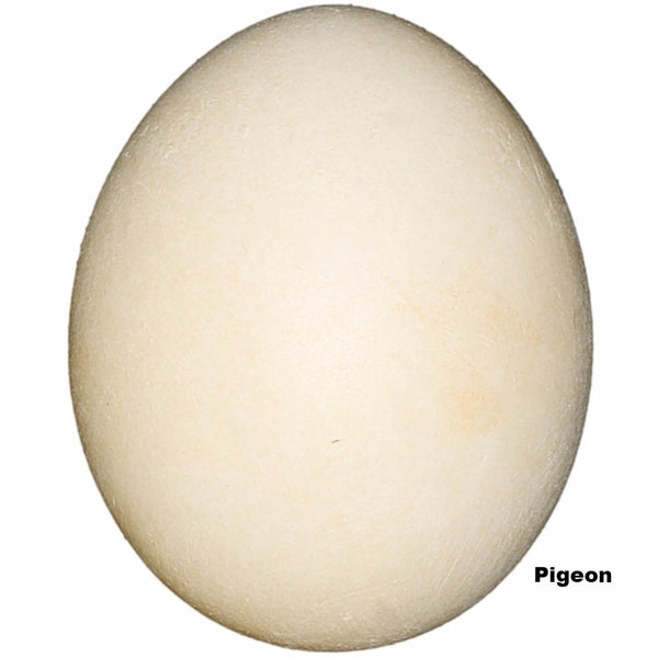 Replica Pigeon (Rock Dove) Egg  (39mm)