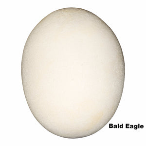 Replica Bald Eagle Egg (70mm)