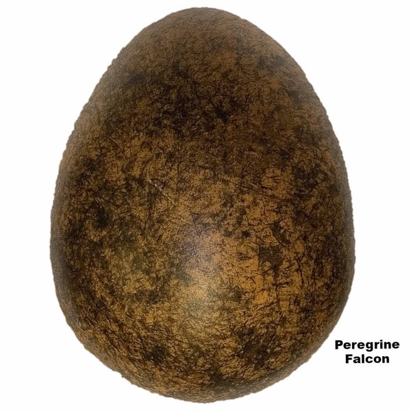 Replica Peregrine Falcon Egg (53mm)