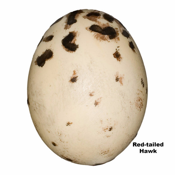 Replica Red-tailed Hawk Egg (59mm)
