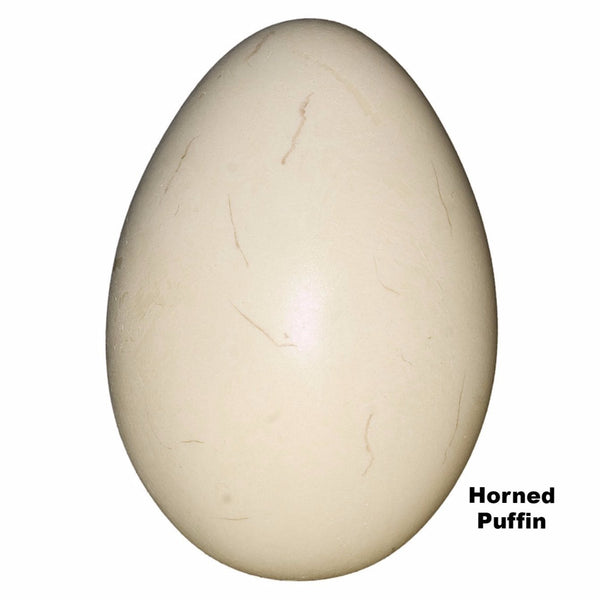 Replica Horned Puffin Egg (60mm)