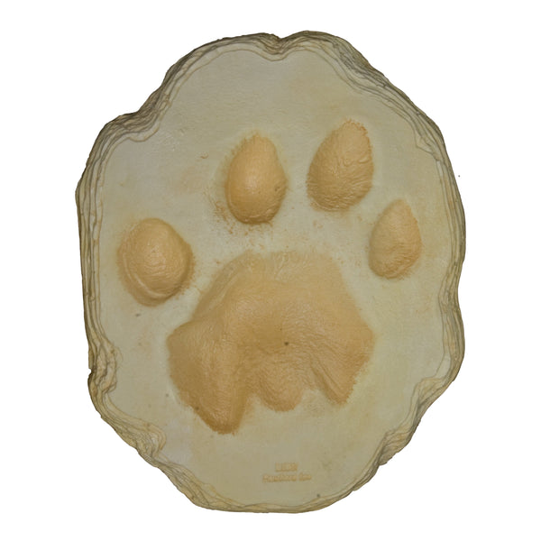 African Lion Footprint