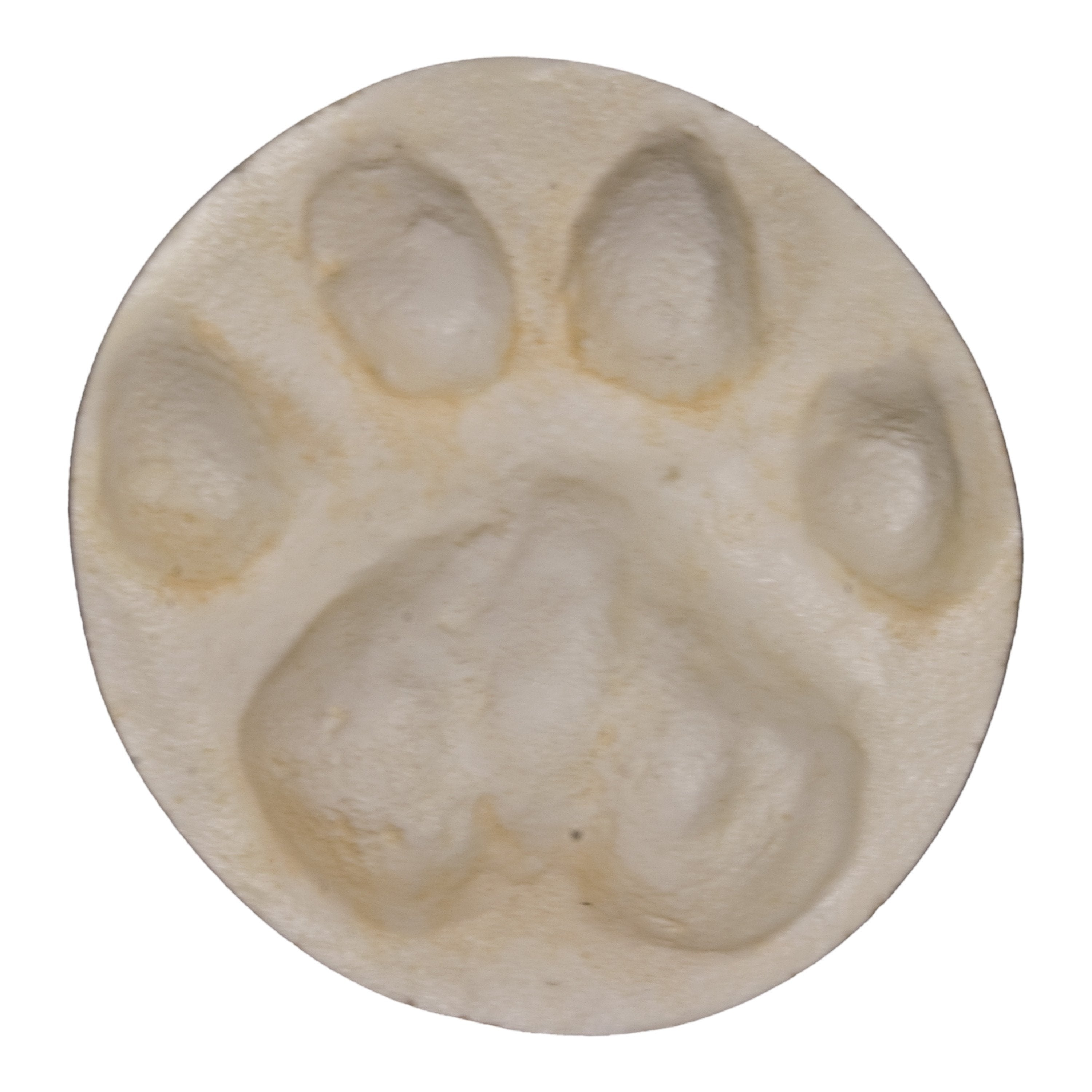 mountain lion negative footprint for sale skulls unlimited