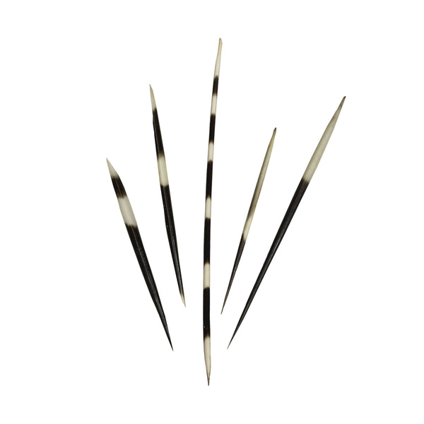 Bag-O-Assorted African Porcupine Quills