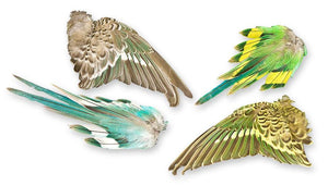 Real Parakeet Wings and Tail