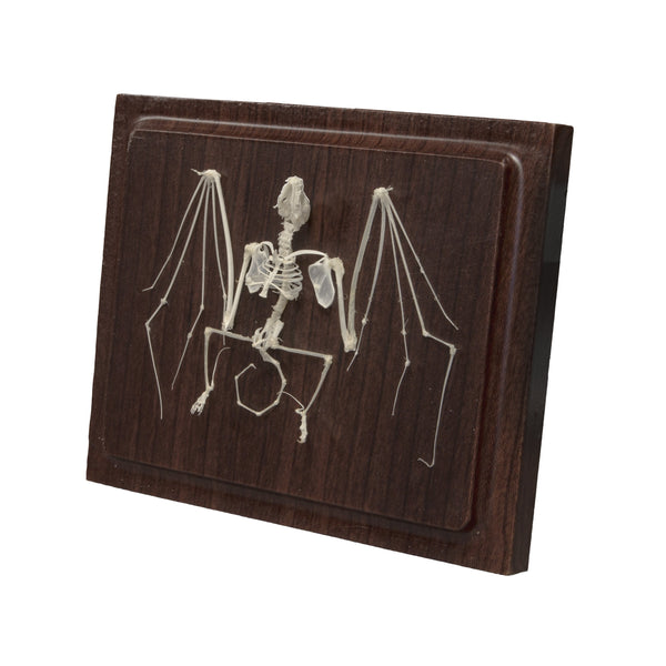 Real Bat Economy Skeleton