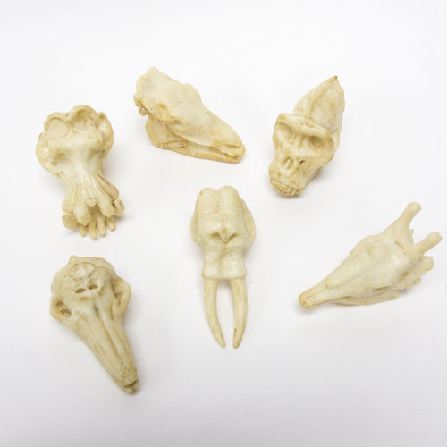 Animal Skull Pencil Topper (Modern Animals)