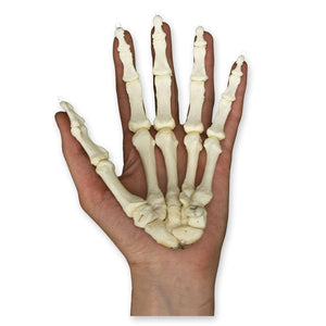 Real Research Quality Human Hand