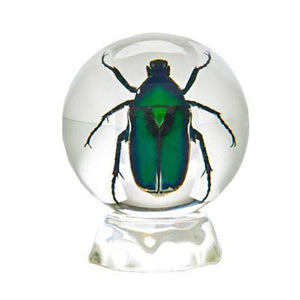 Green Chafer Sphere