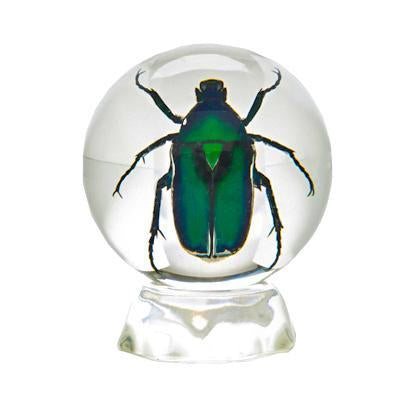 Real Insect display of a Green Chafer Beetle Taxidermy Cast in Acrylic Entomology Collection Paperweight Sphere
