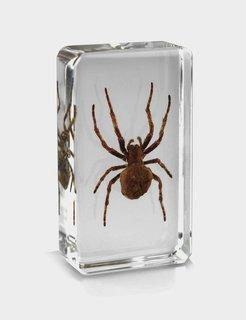 Real Spider in Acrylic Paperweight