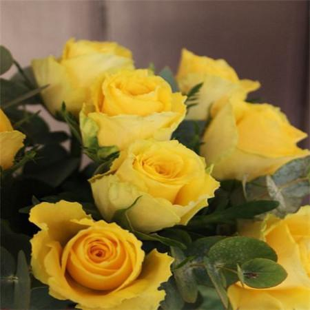Compton - Twelve - Yellow Long Stem Roses.