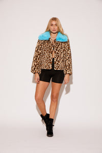 shaci vegan leopard faux fur jacket with neon blue collar