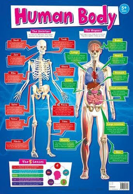 Human Body Wall Poster 9781786707130