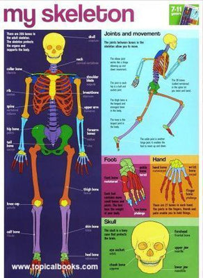 Skeleton Wall chart Poster.Dimensions 520 x 760mm