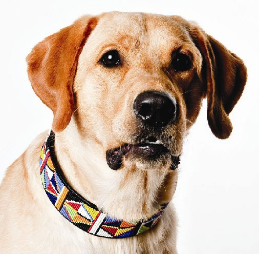 Hand Made Beaded Leather Dog Collar - MAASAI BLUE ZIGZAG - ShopNowBeforeYouDie.com