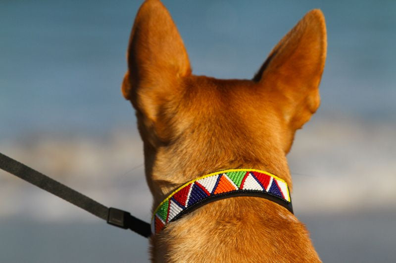 Hand Made Beaded Leather Dog Collar - PUEBLO BLACK