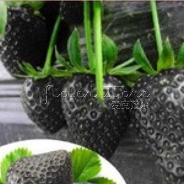 100 Healthy Black Strawberry Seeds ruit Fresh Exotic Seeds Good Taste Fruits Easy Care - ShopNowBeforeYouDie.com
