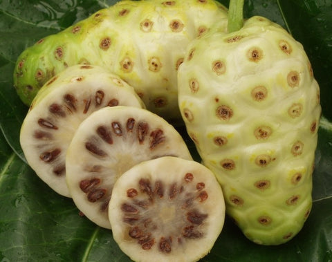 20 seeds/pack NONI Seeds Delicious Fruit seeds Morinda Citrifolia Tree Seed 5pcs Free shipping - ShopNowBeforeYouDie.com