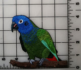 "Blue-Headed Pionus, Blue-Headed Parrot Embroidered Patch 4.5"" x 4.6"""