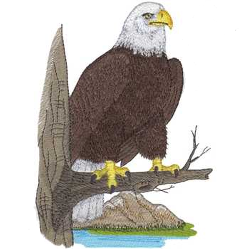 "Bald Eagle, Birds of Prey Embroidered Patch 4.9"" x 6.9""  Free USA Shipping"