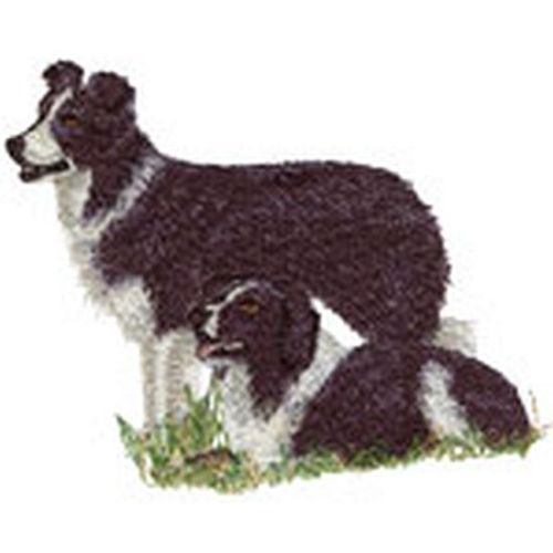 "Border Collies Embroidered Patch 4.3"" x 3.5"""