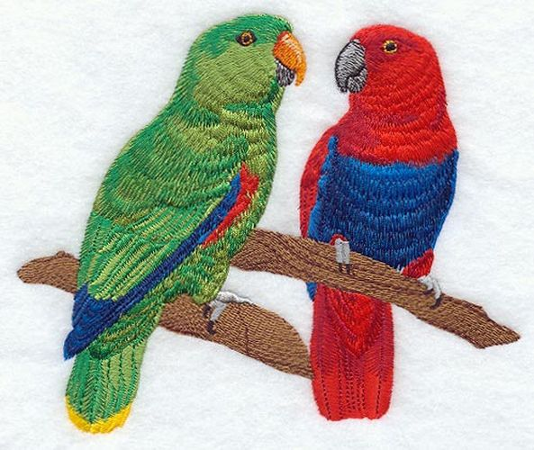 "Eclectus Parrots Pair Embroidered Patch 6.5"" x 4.5"""