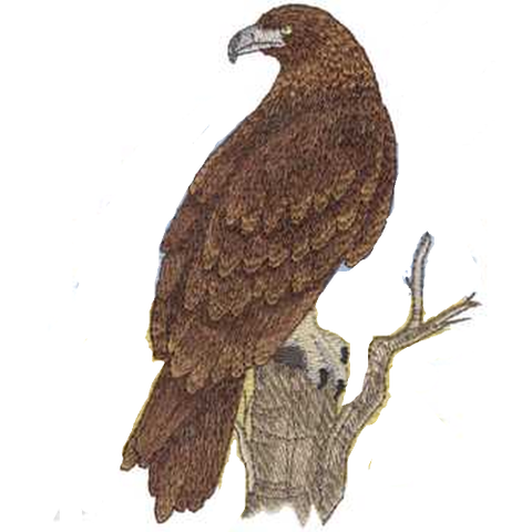 "Golden Eagle (582) Embroidered Patch  4.5"" x 6"" Free USA Shipping"