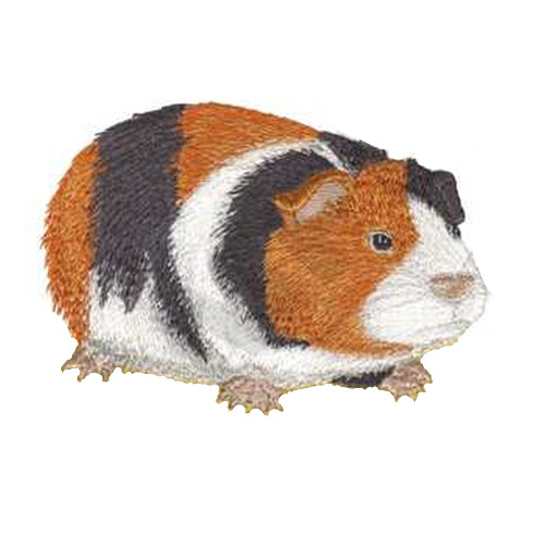 "Guinea Pig Embroidered Patch (696) 5"" x 3"" Free USA Shipping"