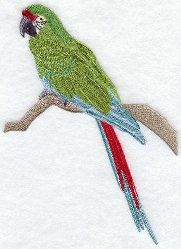 Military Macaw Parrot Bird Embroidered Patch Free USA Shipping
