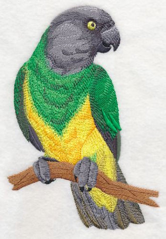 Senegal Parrot Perching Embroidered Patch