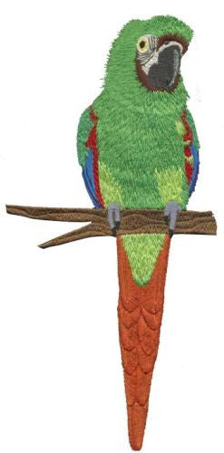 Severe Macaw, Mini Macaw, Parrot Embroidered Patch