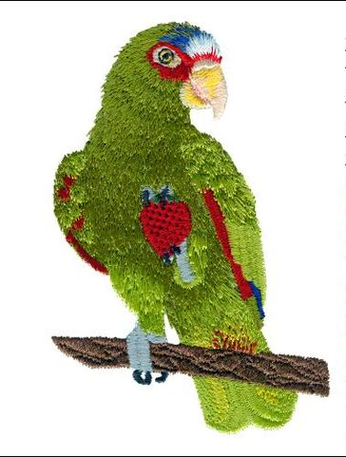 "White Fronted, Spectacled, Amazon, Parrot Bird Embroidered Patch 3"" x 4.6"""